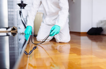 Guidelines To Help In Finding Pest Control Company With Best Reviews Near Charlotte NC